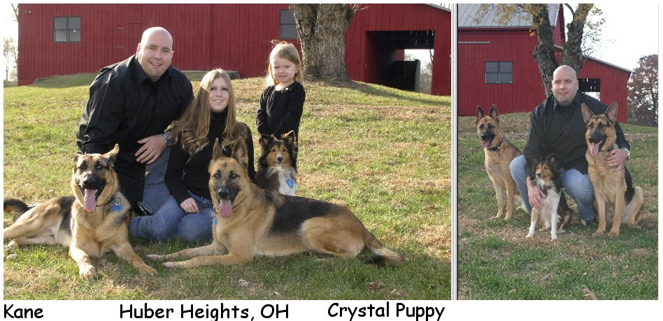 german shepherd puppy male, female german shepherd pups, german shepherd puppies, GSD pup for sale in ohio